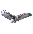 bald eagle swoop attack hand draw and paint vector image