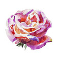 handmade watercolor rose isolated on white vector image vector image