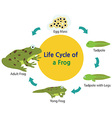 froglife vector image