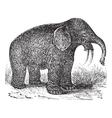 Hoe Tusker vintage engraving vector image vector image