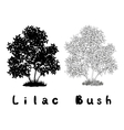 Lilac Bush Contours Silhouette and Inscriptions vector image vector image