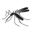 mosquito isolated on white background vector image vector image