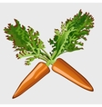 Two carrots with leaves isolated object vector image