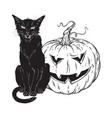 black cat sitting with halloween pumpkin isolated vector image vector image