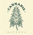 vintage cannabis monochrome vector image vector image