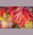 autumn fall red leaf on bokeh background vector image vector image