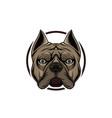 head border bulldog logo template vector image vector image