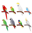 tropical parrot set isolated on white background vector image
