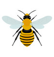 bee design vector image