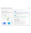 cbd benefits human horizontal business infographic vector image vector image