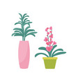 flower plant in vase potted flourishing vector image vector image