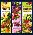 fruit and berry banner of tropical or garden plant vector image