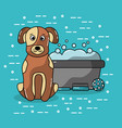 pet dog sitting with bucket wash grooming brush vector image vector image