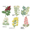 set medical herbs amaranth shepherds purse vector image vector image