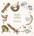 spices banner card hand draw sketch vector image vector image