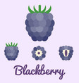 Blackberry flat design