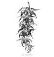 goji berry hand drawing vintage engraving black vector image vector image
