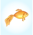 One goldfish Golden fish on a light background vector image