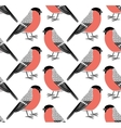pattern of bullfinch vector image