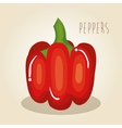 peppers fresh vegetables icon vector image vector image