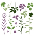 Set of silhouettes of summer plants vector image vector image