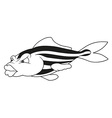 Striped Fish vector image vector image