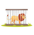 lion in cage vector image vector image