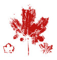 maple leaf print vector image vector image