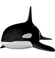 orca2 vector image vector image