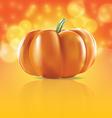 pumpkin in light vector image vector image