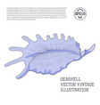 seashell vintage stylized as hand-drawn sketch vector image vector image