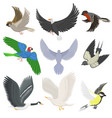 set of different wing wild flying birds cartoon vector image vector image