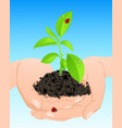 young green plant in hands vector image vector image