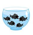 Aquarium with piranhas Dangerous evil toothy fish vector image vector image