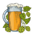 beer and hops plant color sketch engraving vector image vector image