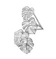 philodendron leaves hand drawn vector image vector image