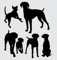 viszla dog animal silhouette vector image vector image
