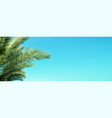 palm branches on blue summer sky background long vector image vector image