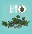 set of isolated plant hemp leaves herb vector image