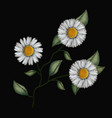 colorful chamomile flowers plant set embroidery in vector image vector image