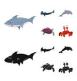 isolated object of sea and animal symbol set of vector image vector image