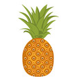 isolated pineapple vector image