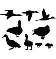duck collection vector image vector image
