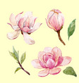 watercolor magnolia floral composition vector image