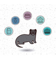 isolated ferret and pet icon set design vector image