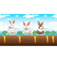 Three rabbits in the carrot farm vector image