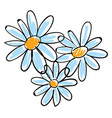 white chamomile flowers on white background vector image vector image