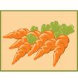 Bunch of Carrots vector image