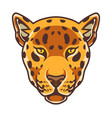 cheetah head mascot logo vector image