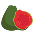 guava on white background vector image vector image